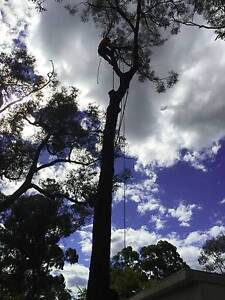 4 SEASONS TREE LOPPING SERVICE Rooty Hill Blacktown Area Preview