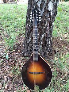 Pava A mandolin Stanley Indigo Area Preview
