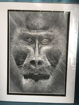 Pencil Drawing Drill Monkey By Gary Tymon
