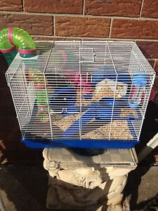 Baby boy mouse for 50$ Tugun Gold Coast South Preview