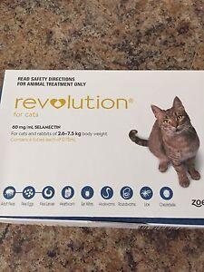 Cat's Revolution