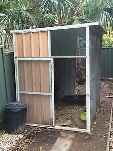 Bird avery Northmead Parramatta Area Preview