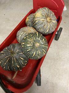 Fresh Pumpkins!