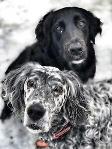 Dog Walker / Pet Sitter (pet first aid certified)