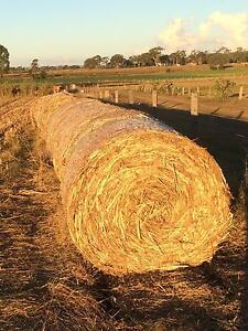 Fresh forage hay for sale Nobby Toowoomba Surrounds Preview