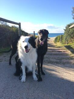 Dog Walking and Training