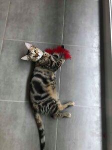 Rescue Kittens