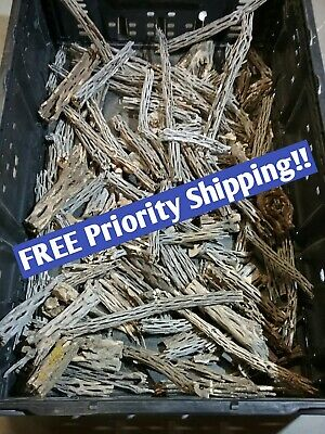 NEW 2+ LBS organic CHOLLA Wood Whole Pieces Split Halves Ends Fish Shrimp Crafts