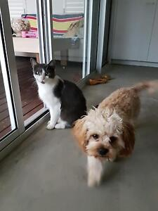 Free Cat to a loving home Bokarina Maroochydore Area Preview