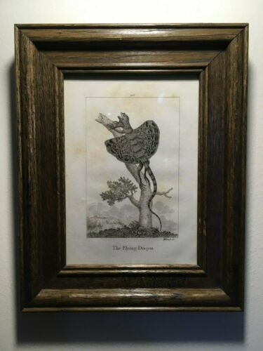 """1805 Framed Rare Antique Copperplate Engraving,""""The Flying Dragon"""", Amazing!!!!!"""