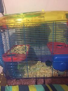 Family of mice for sale