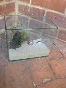 Small glass aquarium for Crazy Crabs with shells Sorrento Joondalup Area Preview
