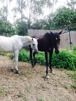 Rental wanted for single female and 2 horses Maudsland Gold Coast West Preview