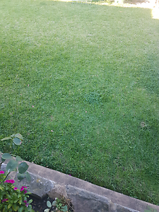 lawnmowing rubbish removals Blacktown Blacktown Area Preview