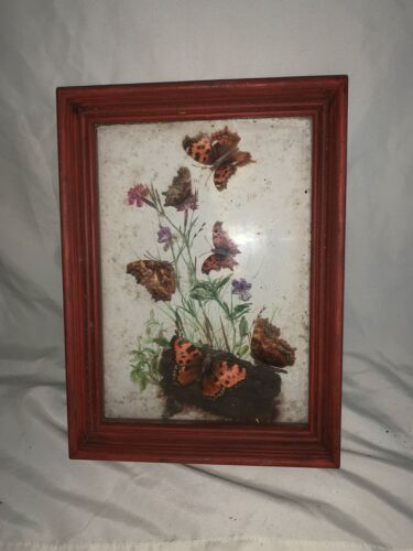 Vintage Framed Butterfly Taxidermy Shadowbox