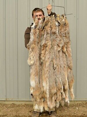 Canadian Lynx, Heavy Fur ,Imperfections , fur Soft professional Tanned,  Lynximp