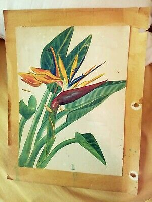 Vintage flower art Hawaiian Collectible 40s 12 frameable pieces