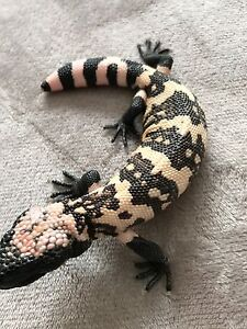2016 baby High Peach Banded Gila Monster (54gr) 9 weeks old only