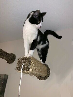 Original Wall Mounted Cat Scratching Post From Meow Maker