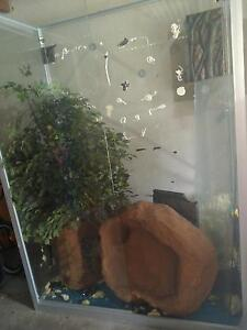 LARGE GLASS SNAKE CAGE WITH BASE Plympton Park Marion Area Preview