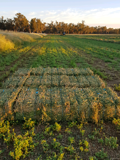 Small Bales of Lucerne hay for sale location Forbes