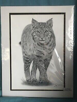 Pencil Drawing Lynx By Gary Tymon