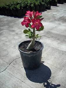 Huge Plant Sale Plants $2 Each Black River Townsville Surrounds Preview