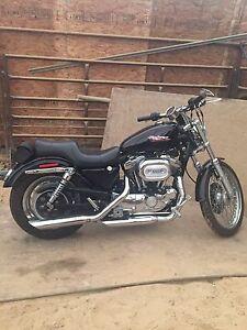 99 Harley Davidson Sportster 1200