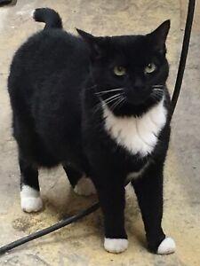 Lost female cat near Lower Sackville
