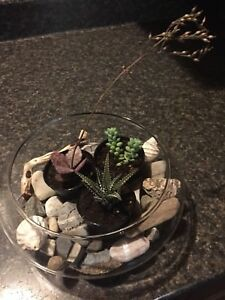 Succulent Gifts - Yes, they're real plants!
