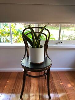 Antique Bentwood chair Blackburn North Whitehorse Area Preview