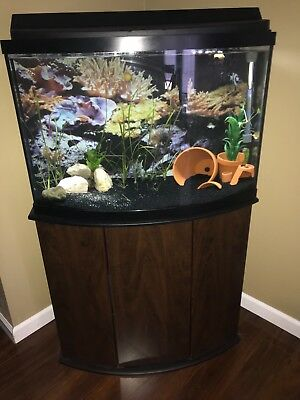 40 gallon bow front tank with stand and accsessories