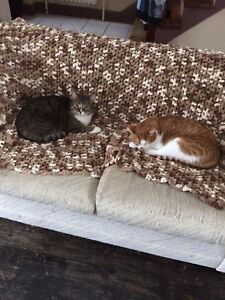 2 3 year old cats for sale