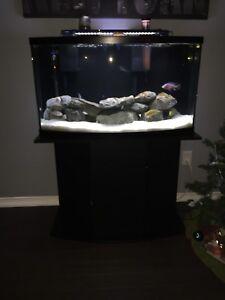 46 gallon complete aquarium with African cichlids