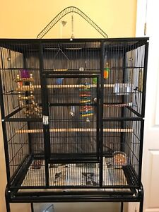 Budgies and Cage for sale