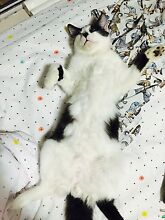 *bankstown*Im looking for a share house with my cat Bankstown Bankstown Area Preview