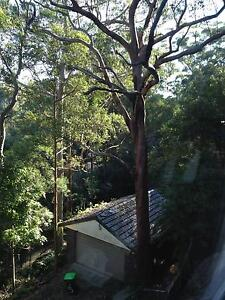 I am looking for an arborist to cut and remove a tree Pennant Hills Hornsby Area Preview