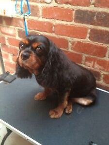 Dog Grooming - Warwick Warwick Joondalup Area Preview