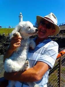 DOG SOCIALISING in TAREE Taree Greater Taree Area Preview