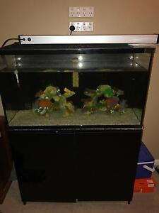 Selling a fish / turtle tank basically brand new Maitland Maitland Area Preview