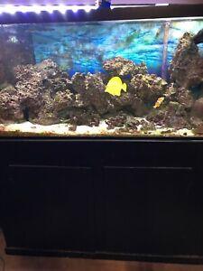 90 gallon aquarium