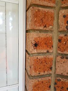 J&C Pest solution Parramatta Parramatta Area Preview