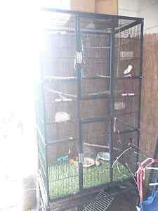 Twin Large Bird Cage, Play Gym and Accessories Blair Athol Port Adelaide Area Preview