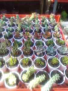 Spring plant sale succulents galore!!! Bidwill Blacktown Area Preview