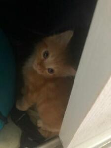 Kittens free to good loving caring homes