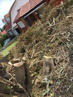 free firewood Beverly Hills Hurstville Area Preview