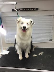 Ruff cuts dog grooming taking new clients
