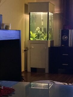 Sell or swap for a bulk lot of fish value $250 Blacktown Blacktown Area Preview