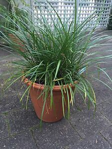 Pots and plants from $4 Lilyfield Leichhardt Area Preview