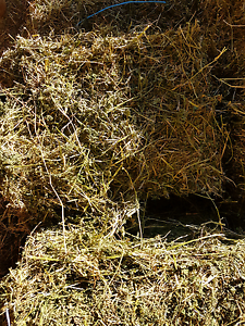 Hay for Sale Largs Maitland Area Preview